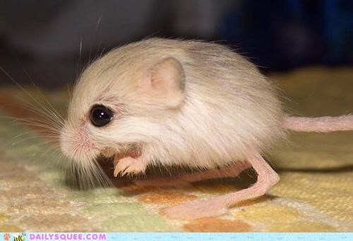 adorable,baby,cute,emile zola,germinal,Hall of Fame,jerboa,name,novel,tiny,title