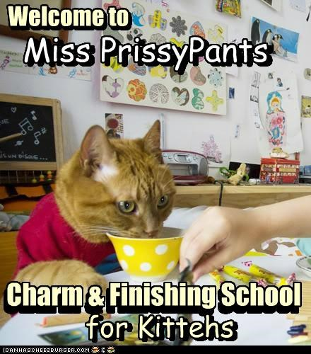 Welcome to Charm & Finishing School for Kittehs Miss PrissyPants Welcome to Miss PrissyPants for Kittehs Charm & Finishing School n n