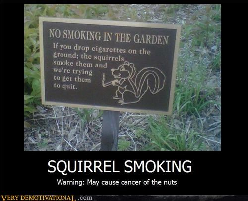 cancer hilarious nuts smoking squirrel