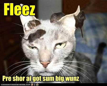 Cheezburger Image 4866366976