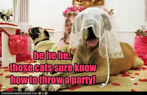 he he he.. those cats sure know how to throw a party!