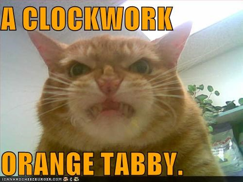 A Clockwork Orange,angry,caption,captioned,cat,clockwork,clockwork orange,orange,tabby