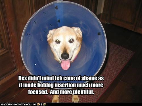Rex didn't mind teh cone of shame as it made hotdog insertion much more focused. And more plentiful.