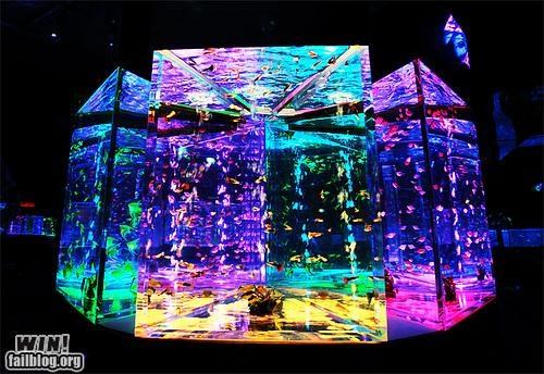 aquarium fish tanks rainbows water - 4867544320