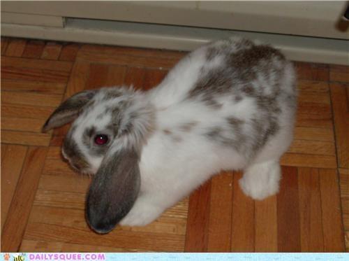 bunny math new pun rabbit reader squees - 4867614976