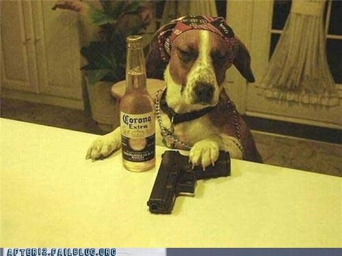animal corona dogs gangsta