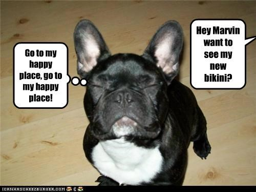 asking bikini do not want french bulldogs happy place new question see - 4867777024