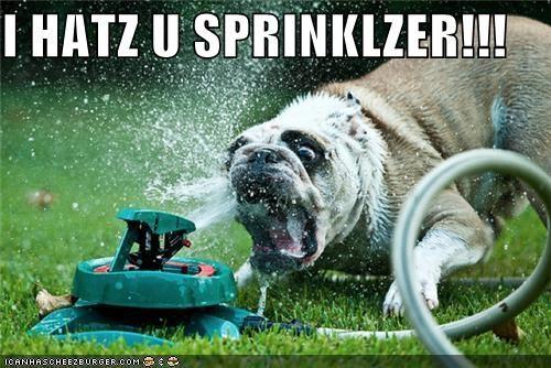 attack,bulldog,critters,sprinkler