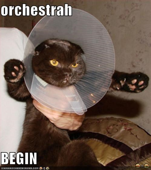 begin caption captioned cat Command conducting conductor cone of shame orchestra - 4868337408