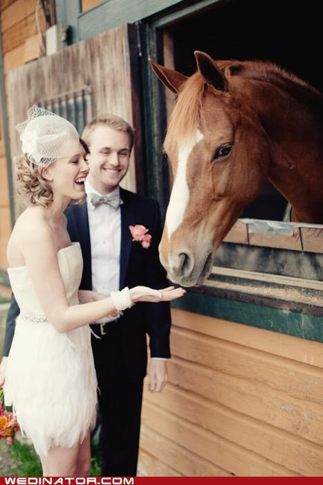 bride,funny wedding photos,groom,horse,ring