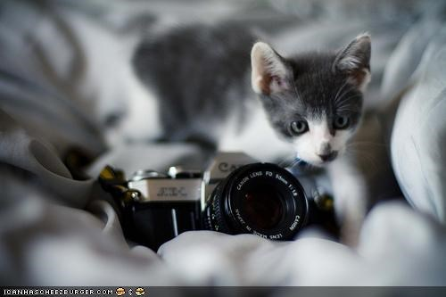 camera cyoot kitteh of teh day photographer smile - 4868768000
