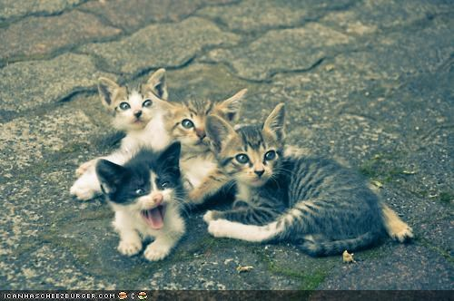 cyoot kitteh of teh day,group,lots of cats,troublemaker