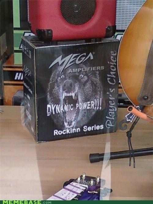 Insanity Wolf IRL Music rocking workout - 4868816640