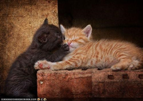 basement cat cyoot kitteh of teh day KISS kissing love orange two cats - 4868823552