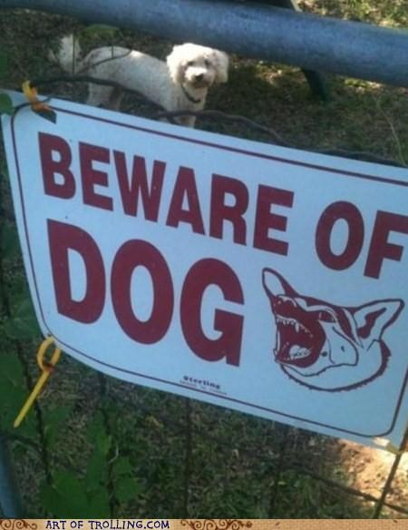 beware,cute,dogs,IRL,scary