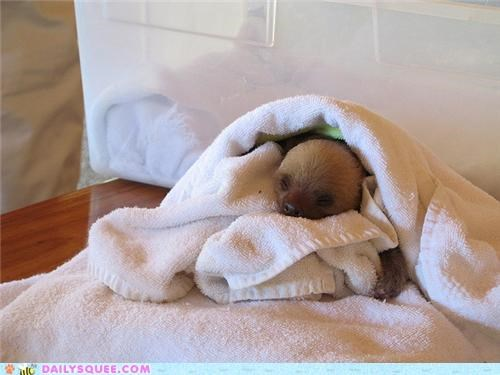 adorable baby clutching grabbing instinct newborn sloth squee spree swaddled - 4869037568