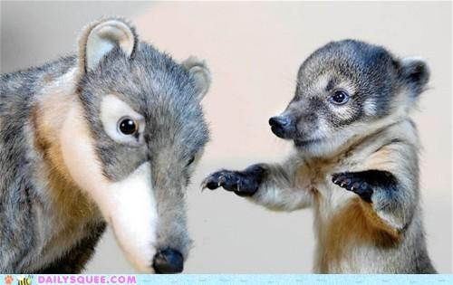 baby,coatimundi,heartwarming,helping,nursing,orphan,preparation,stuffed animal,touching,whatsit,whatsit wednesday