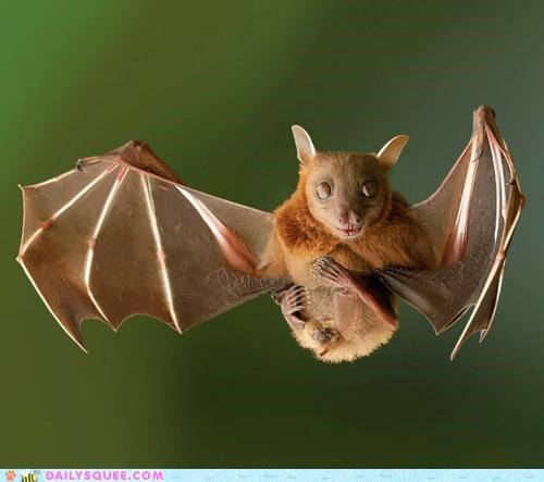 acting like animals bat chair flying hanging out invisible kicking back midair recliner relaxing suspended - 4869078272