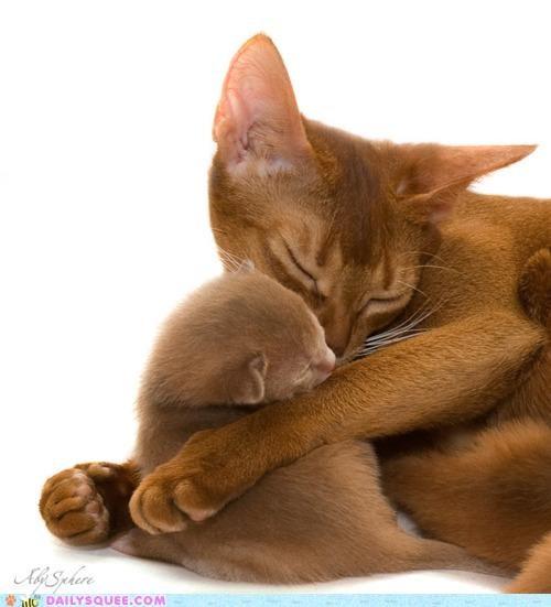 910 adage awww baby cat Cats cuddling joke kitten law mother possession pun rhyme saying sleeping - 4869096448