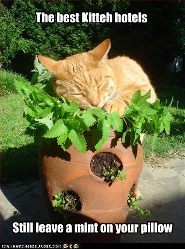 bed best caption captioned cat flower pot hotels leave mint Pillow pot sleeping still tabby - 4869687808