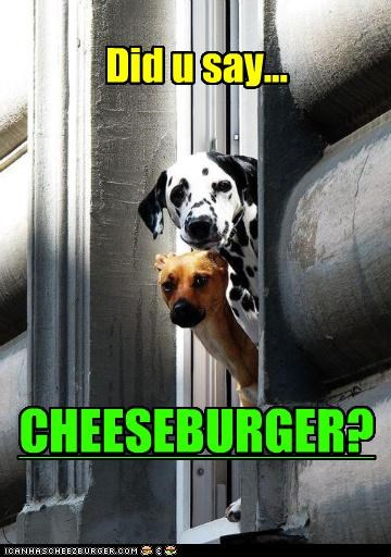 Cheezburger Image 4869874432