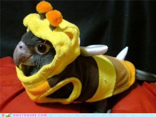 bee,bird,combination,costume,Hall of Fame,reader squees