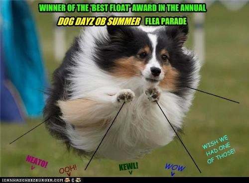 WINNER OF THE 'BEST FLOAT' AWARD IN THE ANNUAL DOG DAYZ OB SUMMER FLEA PARADE ___________ ________________ _________________ ___________ OOH! WOW NEATO! < > > KEWL! > WISH WE HAD ONE OF THOSE!