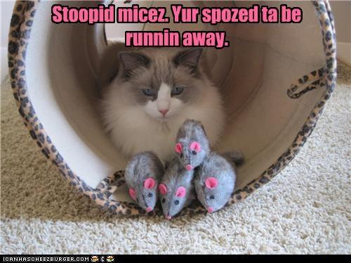 Stoopid micez. Yur spozed ta be runnin away.