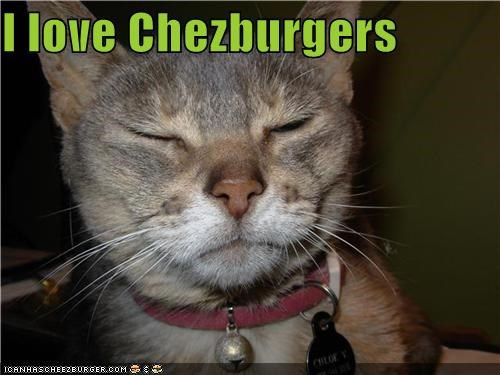 Cheezburger Image 4870971392
