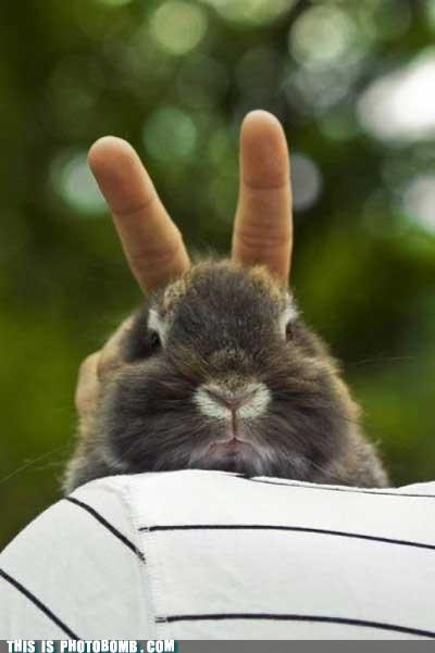 Animal Bomb,bunny,peace,pet,rabbit ears