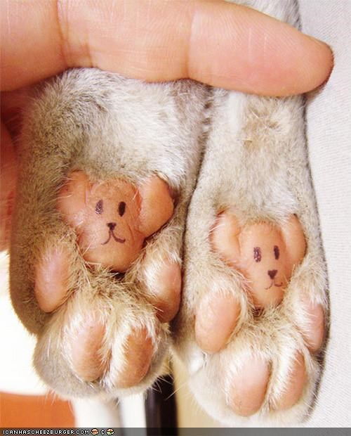 adorable cute feet package post paws splort toes
