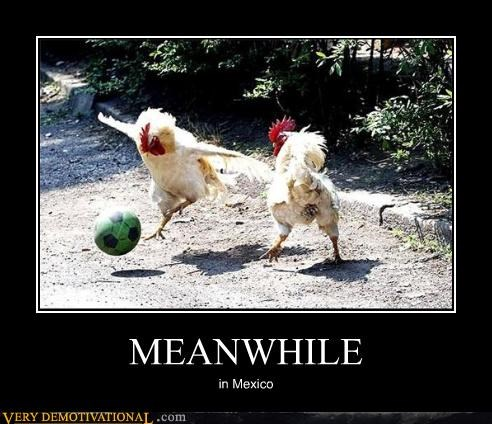 chicken footbal hilarious soccer sports wtf - 4871798528
