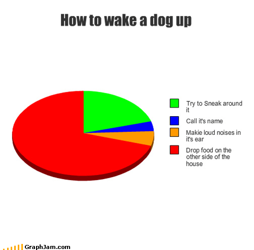 dogs,food,Pie Chart,wake up