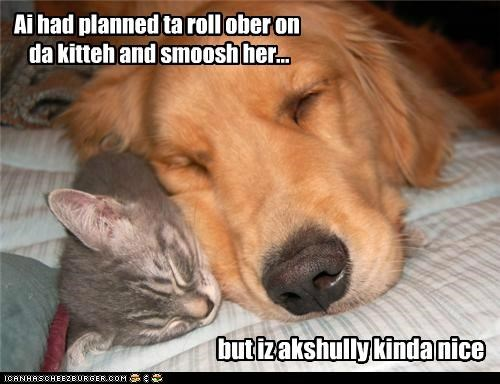 Ai had planned ta roll ober on da kitteh and smoosh her... but iz akshully kinda nice