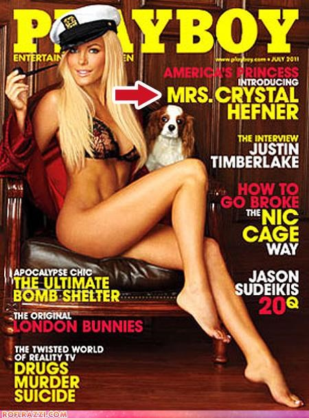 crystal harris,hugh hefner,news,playboy