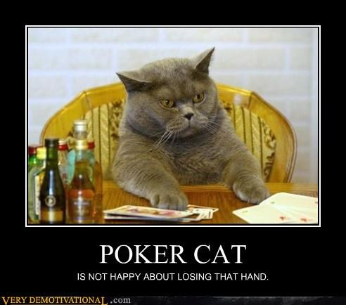 POKER CAT IS NOT HAPPY ABOUT LOSING THAT HAND.