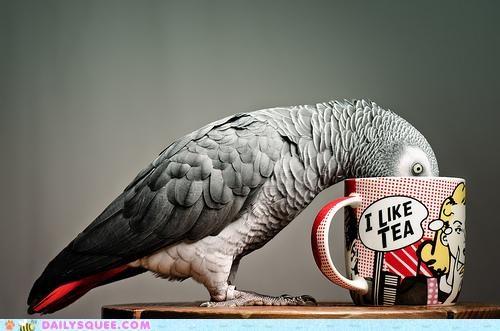 acting like animals bird drinking love mug rhyming tea - 4872639232