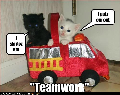 basement cat caption captioned cat Cats ceiling cat end fires Hall of Fame kitten start teamwork toy - 4872705536