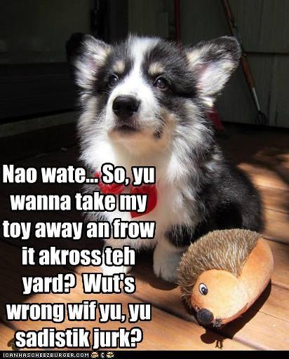 across away best of the week confused corgi Hall of Fame human jerk puppy sadistic take throw toy yard - 4872906240