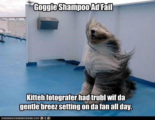 Goggie Shampoo Ad Fail Kitteh fotografer had trubl wif da gentle breez setting on da fan all day.