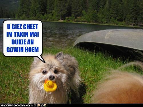 Cheezburger Image 4873272832
