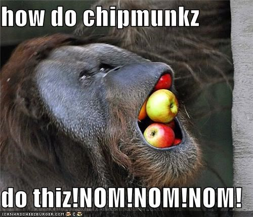 Cheezburger Image 4873284608
