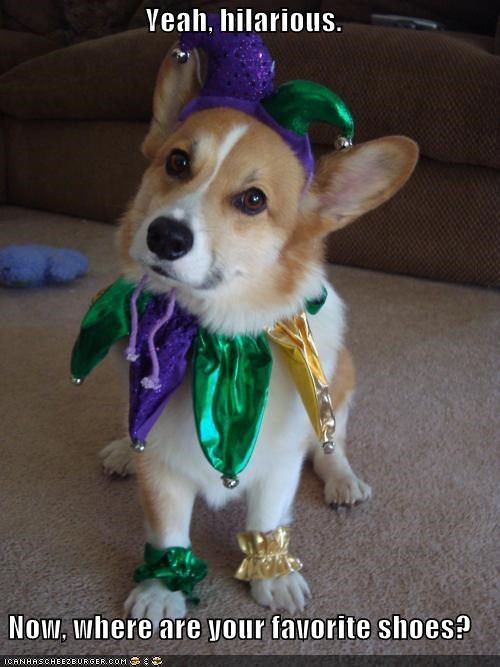 corgi,costume,dressed up,favorite,hilarious,jester,location,question,shoes,where
