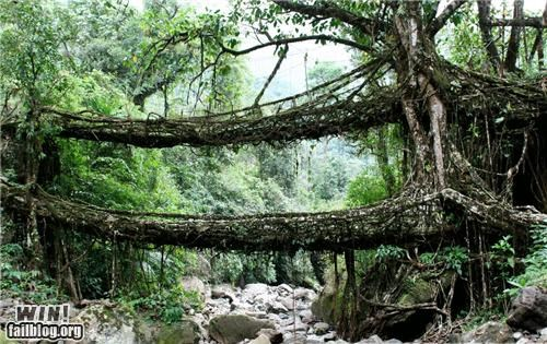 bridge,mother nature ftw,roots,trees