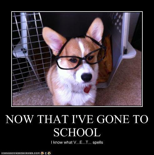 NOW THAT I'VE GONE TO SCHOOL I know what V...E...T... spells