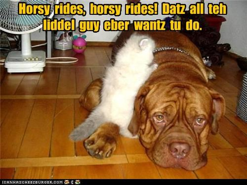 babysitting bored bullmastiff cat horsey kitten ride rides tired - 4874684672