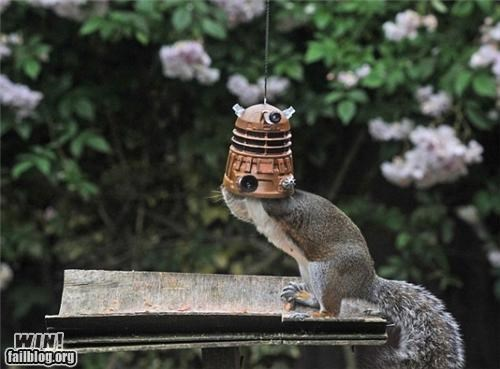 doctor who,feeder,food,mother nature ftw,nerdgasm,squirell