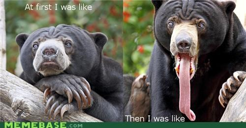 at first i was like,bear,Memes,tongue