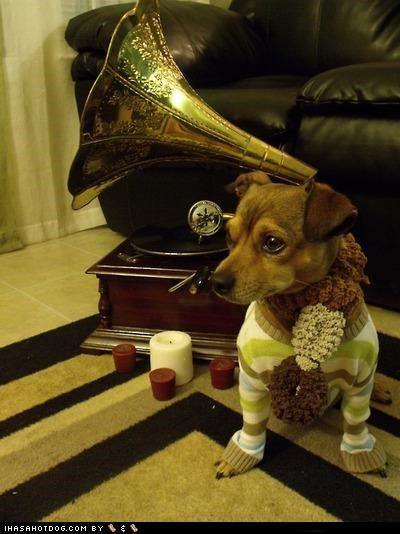 candles,chihuahua,mixed breed,phonograph,scarf,sweater,whatbreed