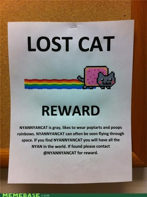animemes,cat,money,nyan,Nyan Cat,reward